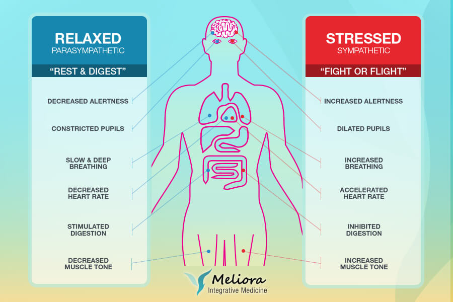 Stress and Your Health